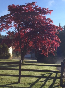 Snohomish Fall Day